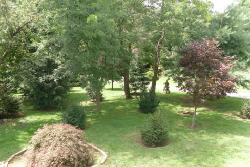 Fr trees